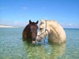 Terri Martinus Beach Rides Sussex