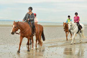 harry-lead-pony-beach